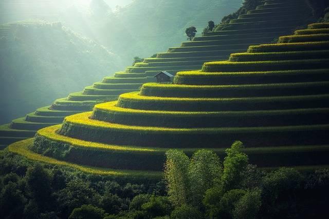 Rice Plantation Thailand - Free photo on Pixabay (595994)