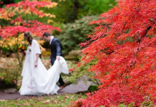 Wedding Maple Japan - Free photo on Pixabay (596064)