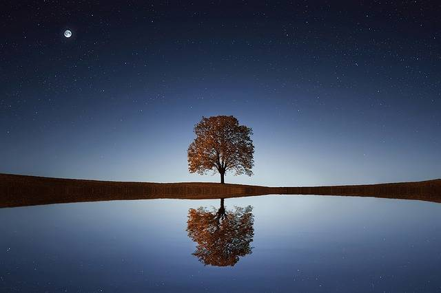 Tree Lake Reflection - Free photo on Pixabay (598192)