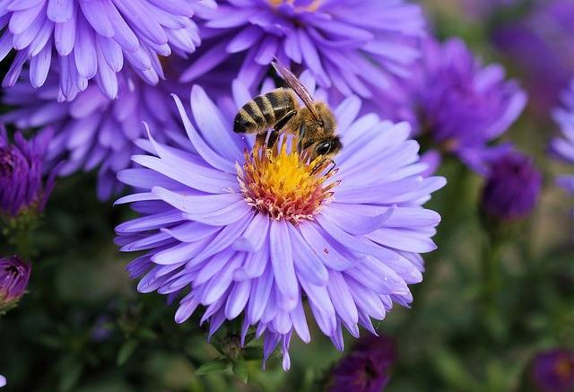 Bee Flower Pollen - Free photo on Pixabay (600074)