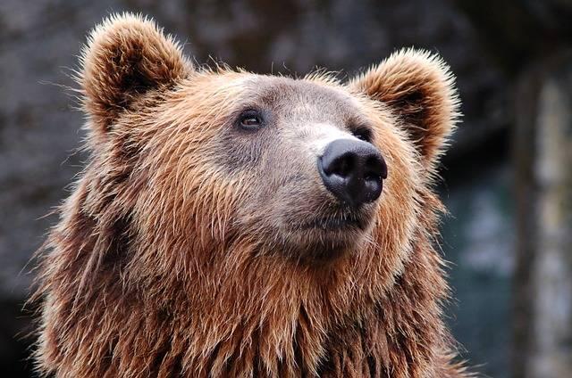 Animal Zoo Bear Brown - Free photo on Pixabay (600425)