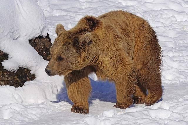 Brown Bear Nature Park - Free photo on Pixabay (600667)
