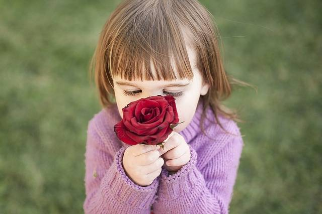 Rose Girl Red - Free photo on Pixabay (601600)