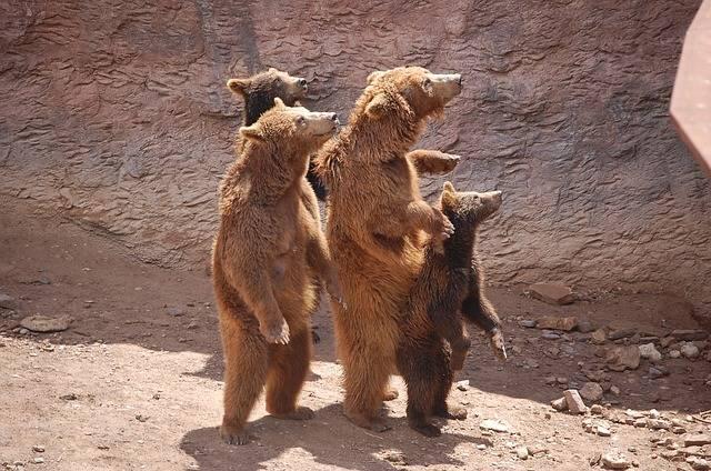 Nature Zoo Brown Bear - Free photo on Pixabay (602932)