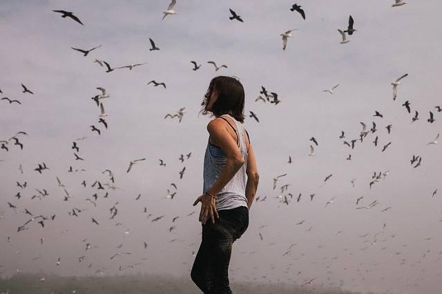 Hipster Birds Flight - Free photo on Pixabay (604021)