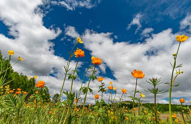 Landscape Meadow Flowers - Free photo on Pixabay (607889)