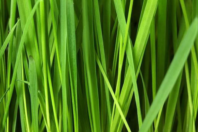 Grass Lawn Background - Free photo on Pixabay (612001)