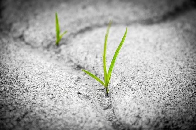 Grass Pavement Brick - Free photo on Pixabay (613544)