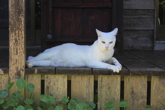 Cat The White Temple Okinawa - Free photo on Pixabay (613995)