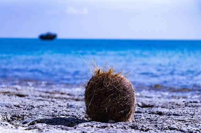Ishigaki Okinawa Coconut - Free photo on Pixabay (613997)