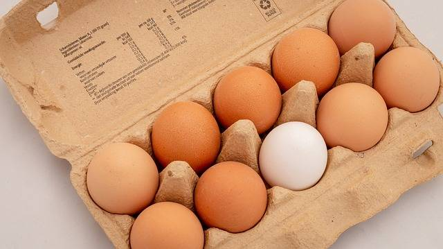 Eggs Ten Box - Free photo on Pixabay (619368)