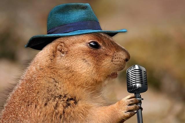 Prairie Dog Singing Musical Rodent - Free photo on Pixabay (619429)