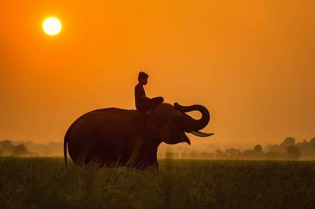 Animals Asia Cambodia - Free photo on Pixabay (623699)