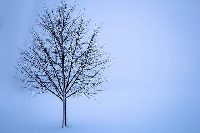 Tree Snow Winter - Free photo on Pixabay (623825)