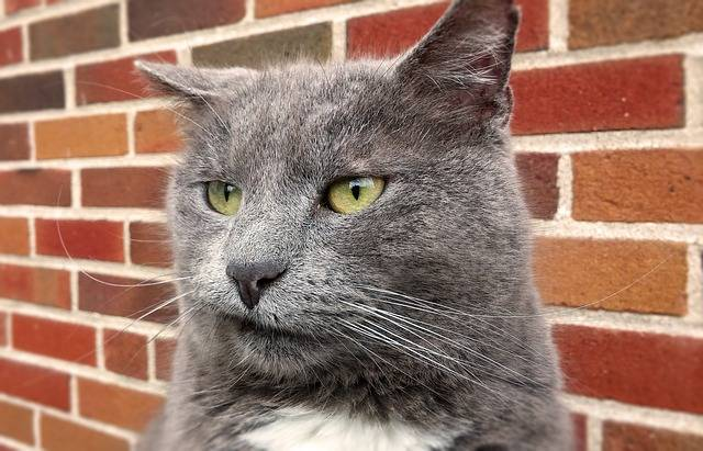 Cat Funny Goofy Face - Free image on Pixabay (627096)