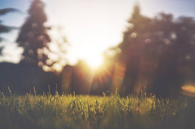 Grass Lawn Green - Free photo on Pixabay (628213)