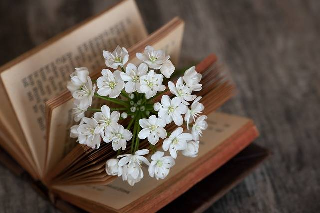 Book Blossom Bloom - Free photo on Pixabay (629349)