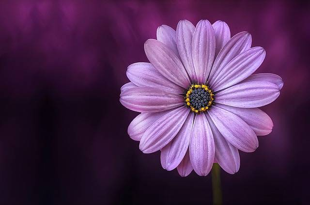 Flower Purple Beautiful - Free photo on Pixabay (631181)