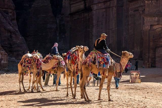 Jordan Petra Camel - Free photo on Pixabay (632990)
