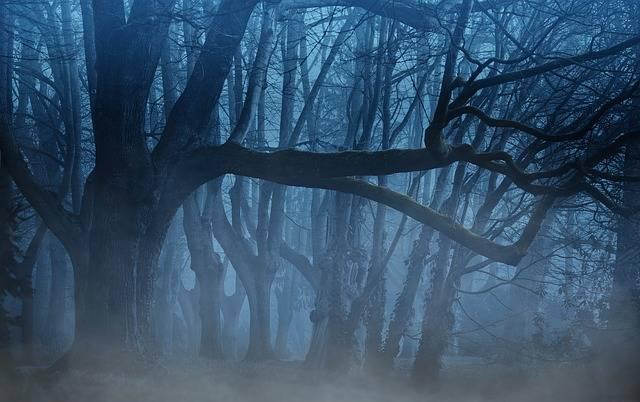 Forest Fog Trees - Free photo on Pixabay (641171)