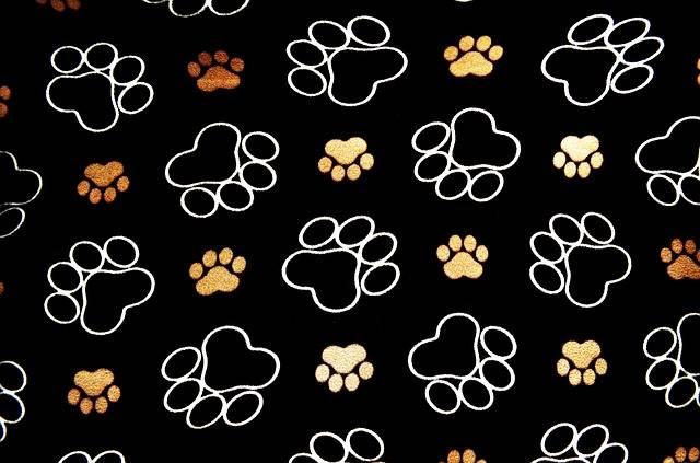 Dog Pawprint Tracks - Free image on Pixabay (642315)