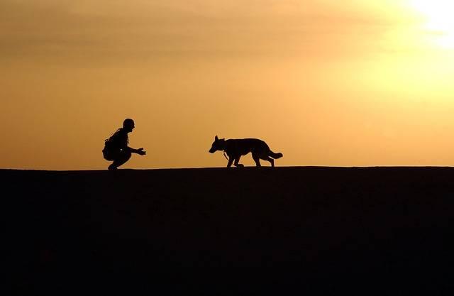 Dog Trainer Silhouettes - Free photo on Pixabay (642326)