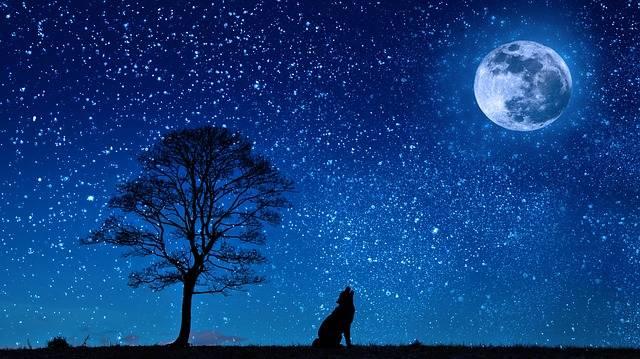 Dog Wolf Yelp - Free image on Pixabay (648992)