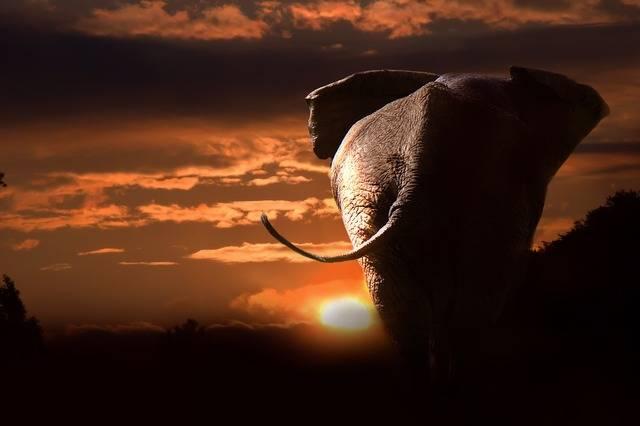 Elephant African Bush - Free photo on Pixabay (656343)