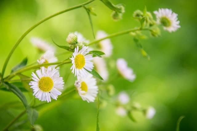 Plant Flower Macro - Free photo on Pixabay (656951)
