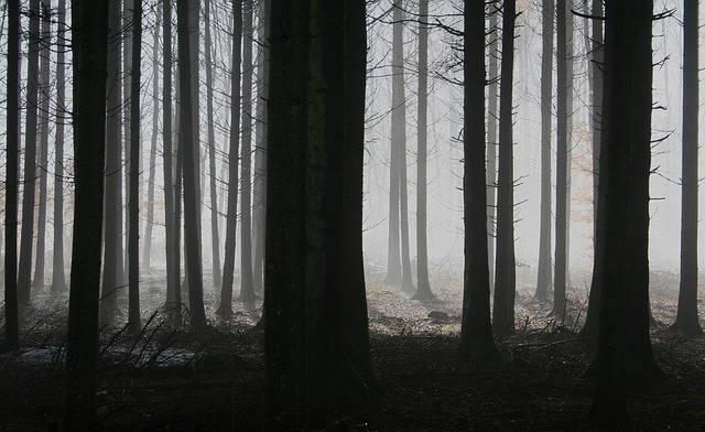 Forest Trees Fog - Free photo on Pixabay (674049)