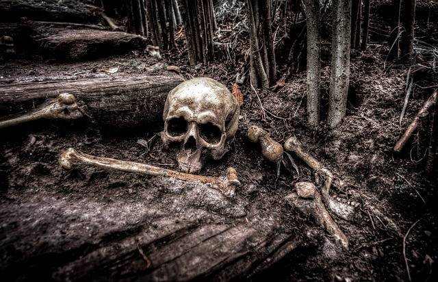 Skull Bones Skeleton - Free photo on Pixabay (674053)