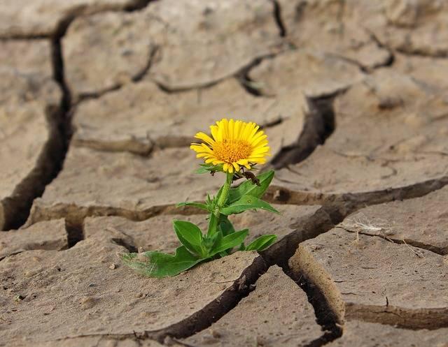 Flower Life Crack - Free photo on Pixabay (685479)