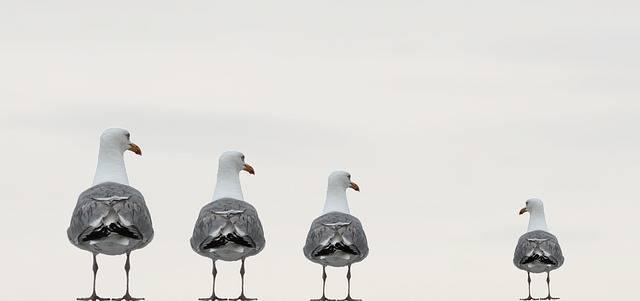 Gulls Fun Photo Composing - Free photo on Pixabay (693631)