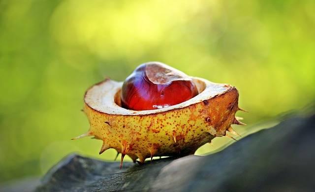 Chestnut Autumn Spur - Free photo on Pixabay (695096)