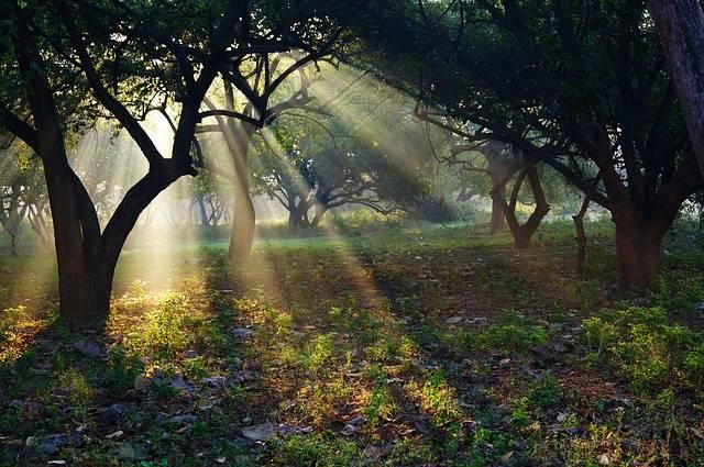 India Ashram Sun - Free photo on Pixabay (705021)