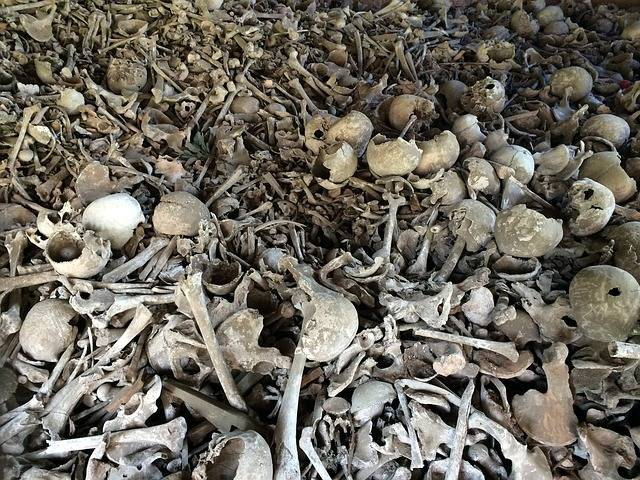 Bone Skull Bones - Free photo on Pixabay (716350)