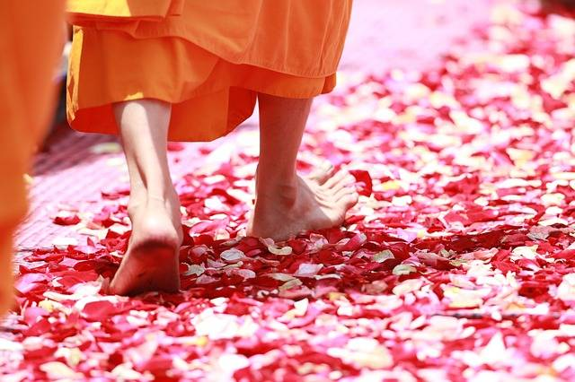 Monk Walking Rose Petals - Free photo on Pixabay (719771)