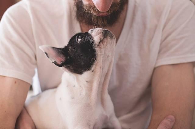 Animals Dogs Friendship - Free photo on Pixabay (721704)