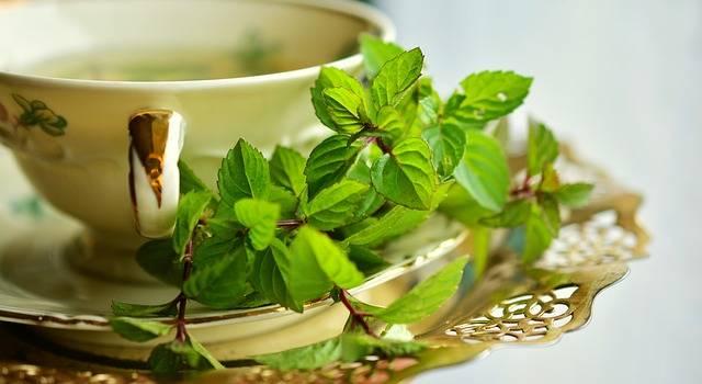 Peppermint Tea Mint - Free photo on Pixabay (725825)