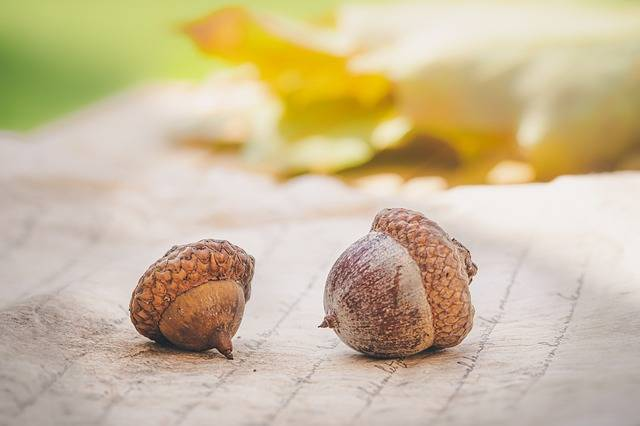 Acorns Autumn Leaves - Free photo on Pixabay (725978)
