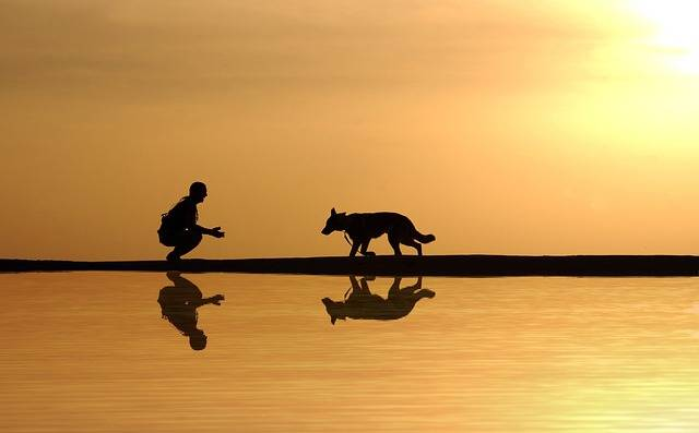 Dog Man Water - Free photo on Pixabay (725981)