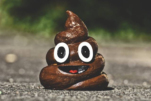 Poop Shit Funny - Free photo on Pixabay (726027)