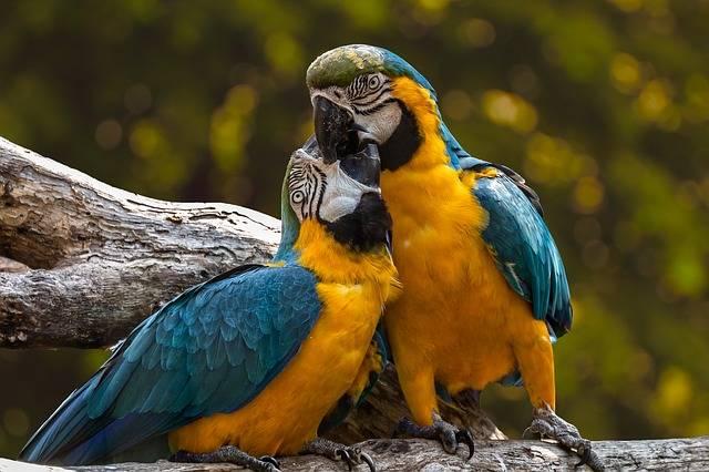 Parrots Exotic Ara - Free photo on Pixabay (726175)