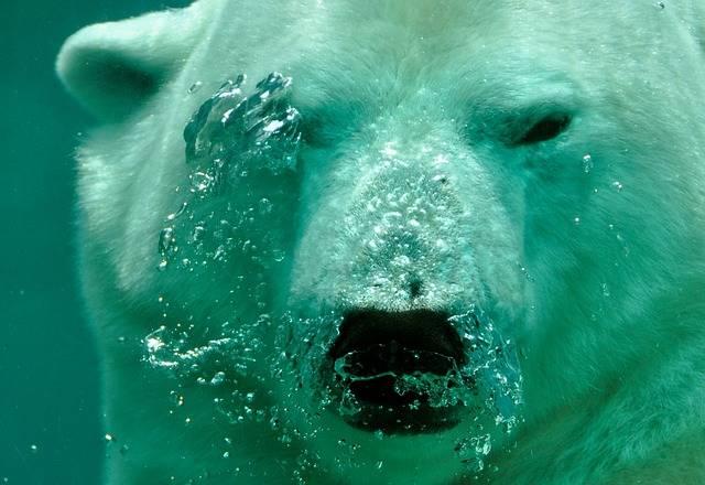 Polar Bear Breath Air - Free photo on Pixabay (732345)