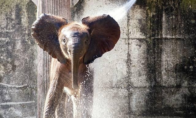 Elephant Mammal Animal - Free photo on Pixabay (732484)