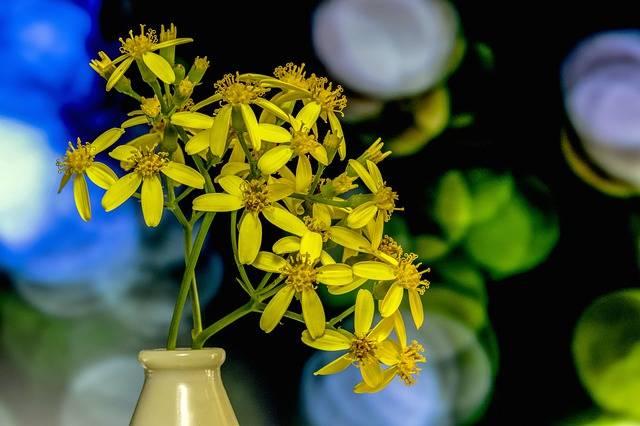 Flower Nature Plant - Free photo on Pixabay (735081)
