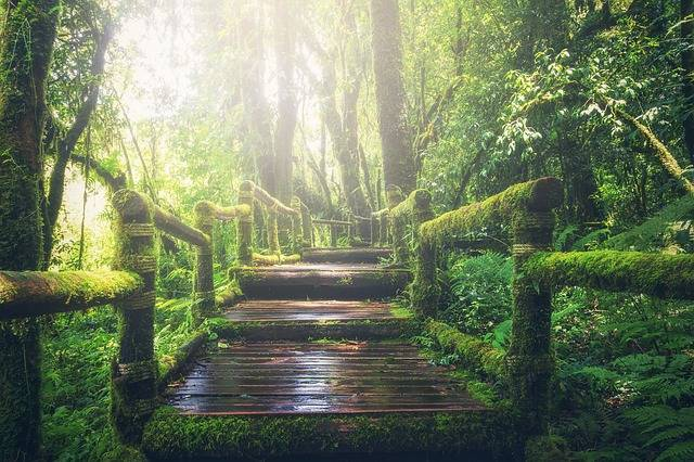 Jungle Pathway Steps - Free photo on Pixabay (735392)