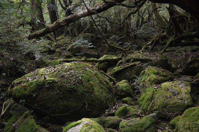Yakushima Island Princess Mononoke - Free photo on Pixabay (736078)