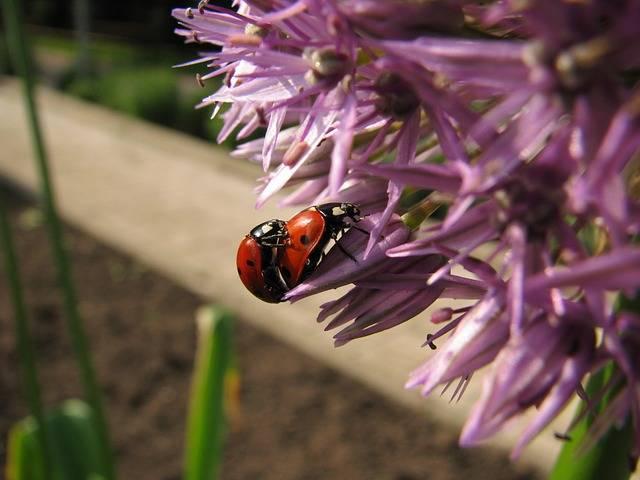Ladybug Blossom Bloom - Free photo on Pixabay (737178)