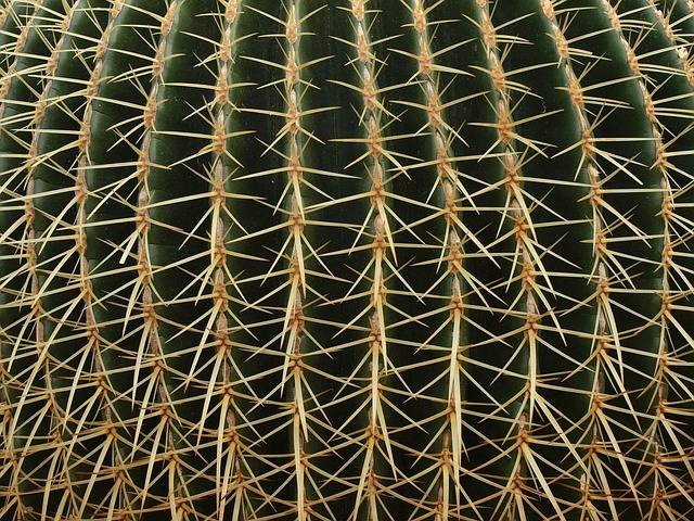 Cactus Plant Desert - Free photo on Pixabay (737426)